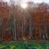 Ces arbres et nature que j'aimerais vous partager - ONVQF.over-blog.com