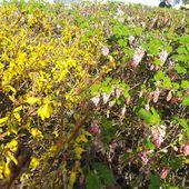 le printemps est là - crea.vlgomez.photographe et bricoleuse touche à tout.over-blog.com