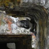 promenade dans la vieille ville de Boulogne sur mer : rencontre avec des lapins, des cygnes et d'autres.. - crea.vlgomez.photographe et bricoleuse touche à tout.over-blog.com