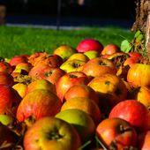Pommes de vie - Quai des rimes