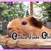 Catégorie poils satinés FAEC / ANEC - Cochon d'inde Club