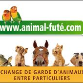 Animal futé : garde d'animaux entre particuliers - Cochon d'inde Club