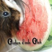Fruits les plus riches en vitamine C - Cochon d'inde Club