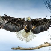 Des aigles pour chasser les drones. Dare to be better ? OK ! - OOKAWA Corp.
