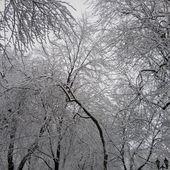 L'hiver magique - Montréal, les caribous et moi