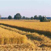"""Ultimi aggiornamenti IMU agricola: dal Senato il dl passa alla Camera - A.I.L. & Coordinamento Salviamo il Paesaggio """"Vulture Alto Bradano"""""""