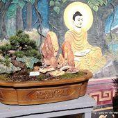 Derniers pas à la pagode Thien Minh - Papier de Verre