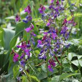 La fête des plantes de St Jean de Beauregard printemps 2014 - plaisir-jardin.com