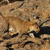 Namibie - #Bernie Pictures