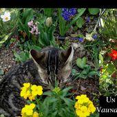 En Vaunage côté Jardin - Orchidium-Vaunage