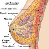Un traitement prometteur contre le cancer du sein - Marichesse.com