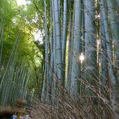 Kyôto : Arashiyama : Le Pont que Traverse la Lune et la forêt de bambous de Sagano - JAPON BALADES