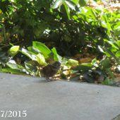 Ebauche de départ des Petits Troglodytes : 11 juillet 2015 - Chez Mamigoz