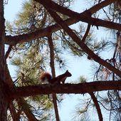 La balade de l'écureuil à Rimont - Autour de