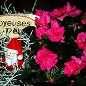 A vos agendas: délices de Noël au Soler le 20 décembre 2015 - Autour de