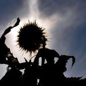A vos agendas: 19ème fête de la châtaigne et du vin nouveau à Tautavel le 9 octobre - Autour de