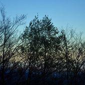 Entre arbres et fer - Autour de