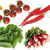 Pourquoi je suis devenue végétarienne - Greenpanda.over-blog.com