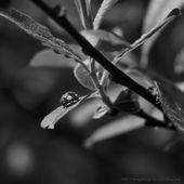 La nature en Noir et Blanc.. - IMAGES, Et Caetera...
