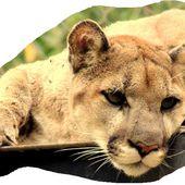 Humour Sexe: Sacrées cougars