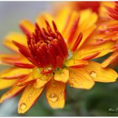 #MonProjet365 - Jour 249 - Orange.. - Le Petit Carnet d'Evelyne