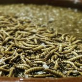 Britain's first insect restaurant brings sustainability to the table