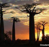 L'Allée des Baobabs obtient enfin son statut d'aire protégée