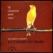 Le canari du Harz - l'oreille cassée