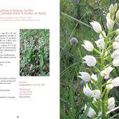 Un ouvrage pour les orchidophiles clermontois - Des fleurs à notre porte