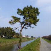 Randonnée du canal à Olonne sur Mer - La Gazette des Olonnes
