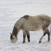 Photos de chevaux à la montagne - Hélène SF