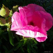 Collection Fleurs de Provence au printemps - Hélène SF