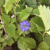 Les graines surprises...petit cadeau de la nature.... - Le blog botanique de Nanie, petit à petit
