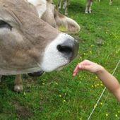 Bréviaire des bonnes manières - Lettre B - La vache rose
