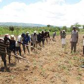 Séisme du 12 janvier 2010, une opportunité ratée de la relance agricole - Politiques agroalimentaires et la faim dans le monde