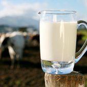 Lait de vache: liste des maladies liées à sa consommation. - Guylaine au Naturel