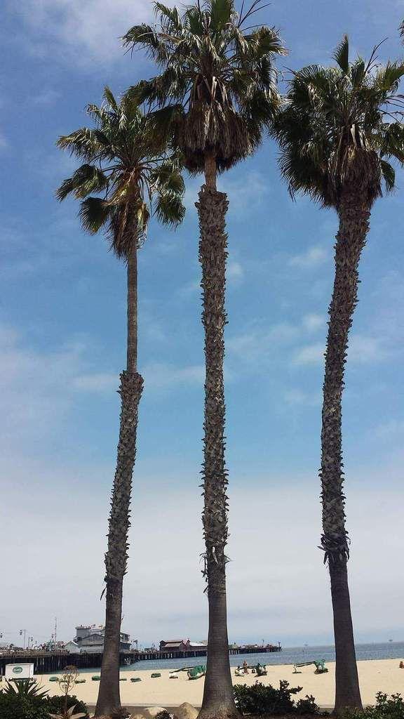 California -Pacific Coast ������
