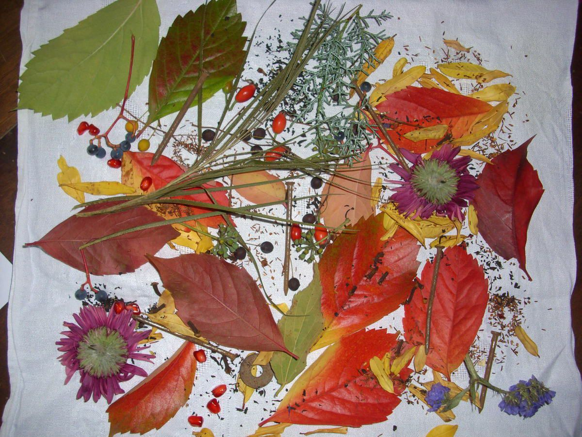 Essai de teinture végétale