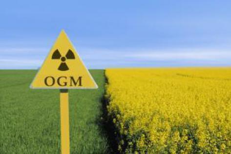 OGM : la recherche est minée par les conflits d'intérêts