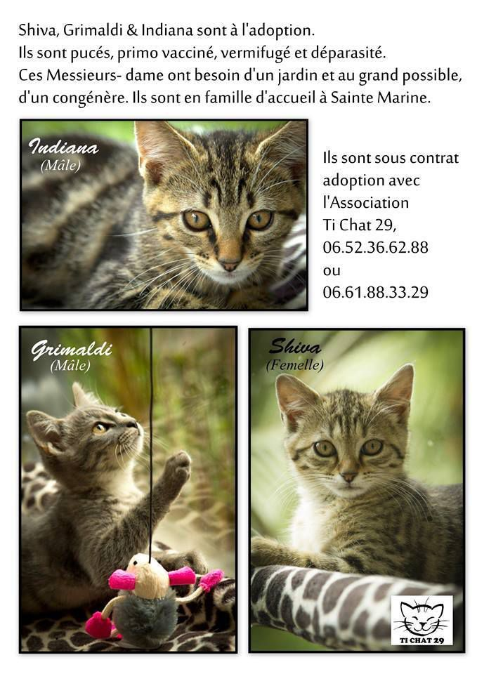 3 Beaux Chatons adoptés
