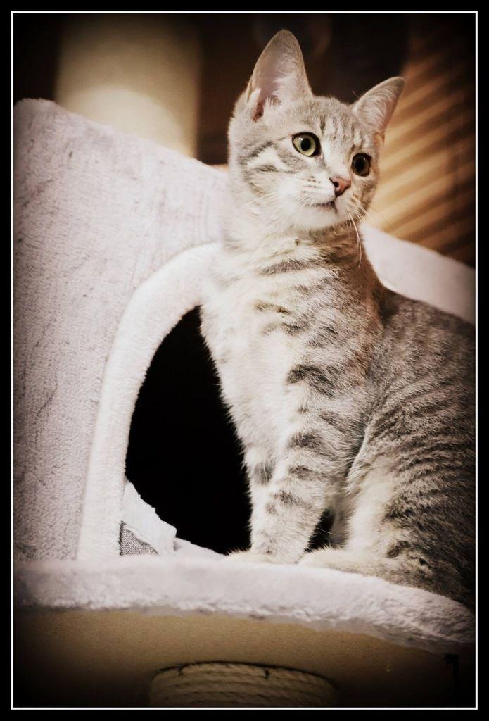 Kilia adoptée