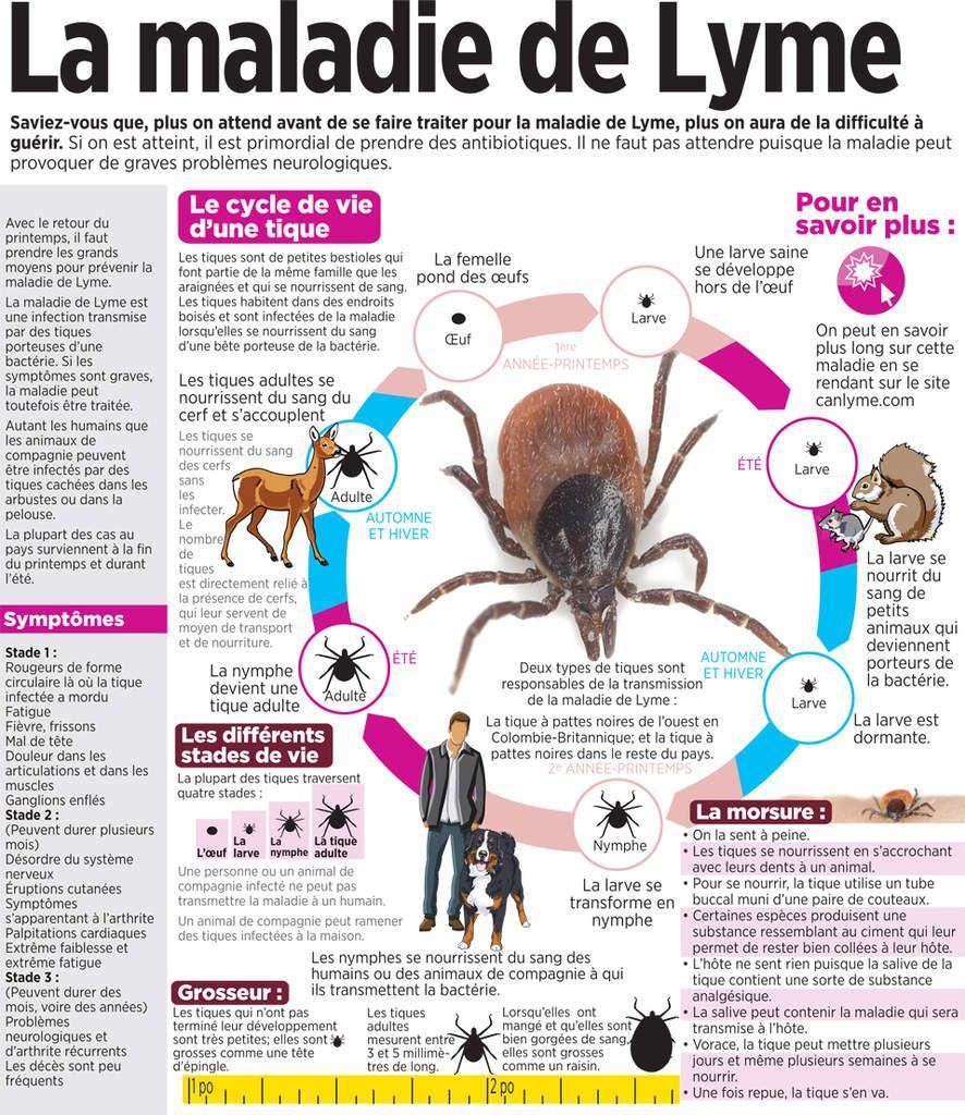 Les tiques et la maladie de Lyme : vers une épidémie ? 3 Vidéos.