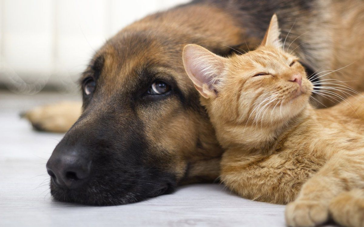 Cat & Dogs Problems Help