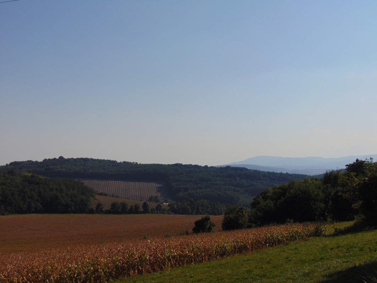 Vue vers la ferme de Goldbuch (au centre) et le Marlenberg (369 m) (à gauche).