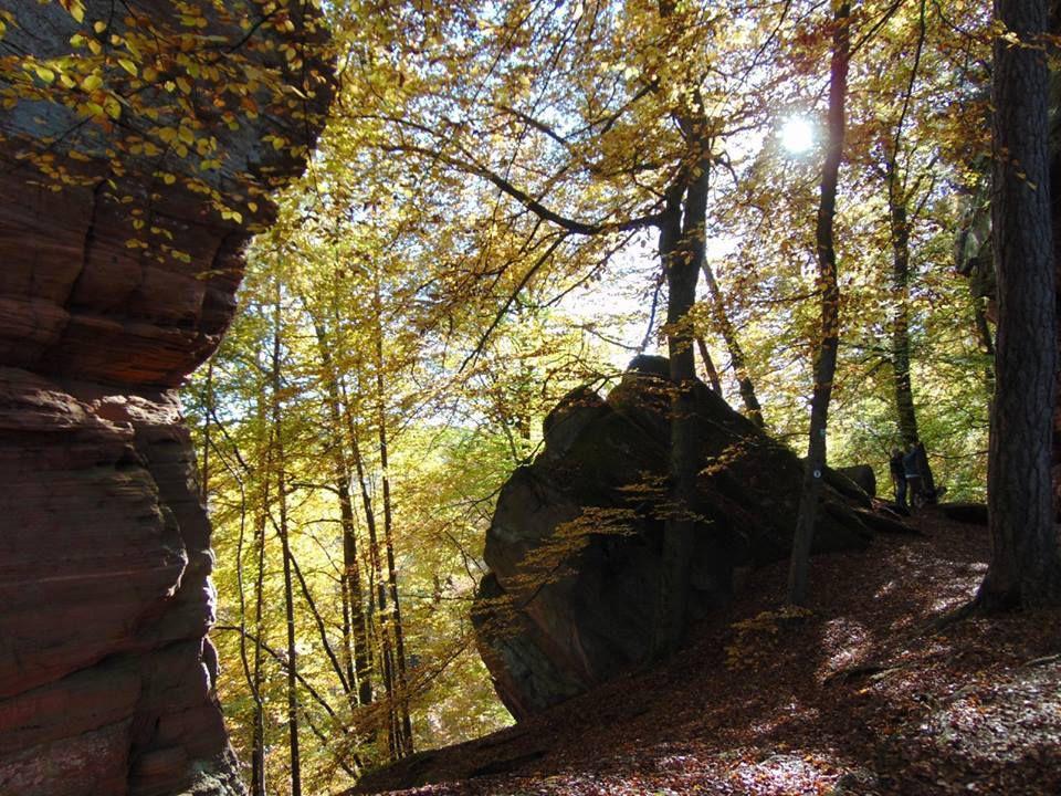 Fenêtre ouverte sur la forêt du Brechenberg.