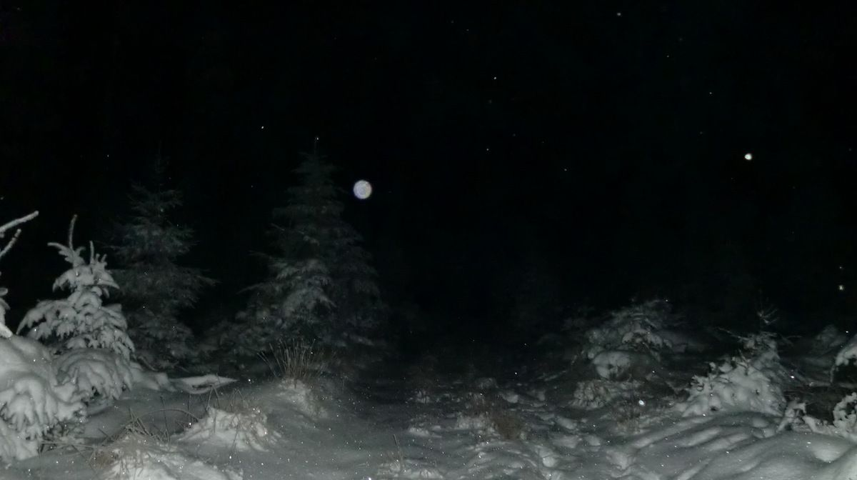 Au sol, les cristaux de neige scintillent, devant nous ce sont les flocons et plus haut dans le ciel, les étoiles.