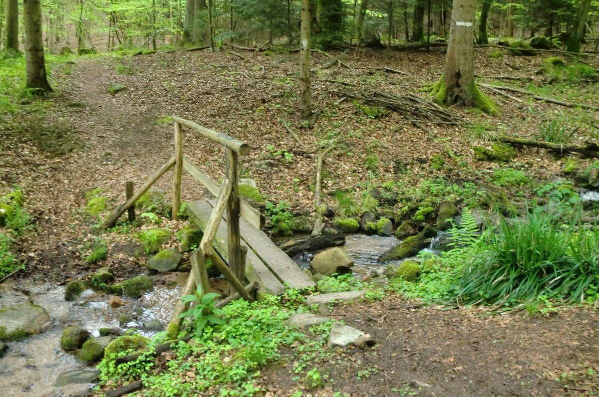 Passage du ruisseau du Ruchtahl, puis nous franchisons le ruisseau du Golbrunnen et