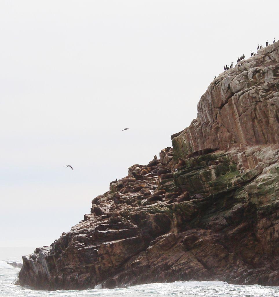 Les vieux loups de mer, affalés sur leur rocher