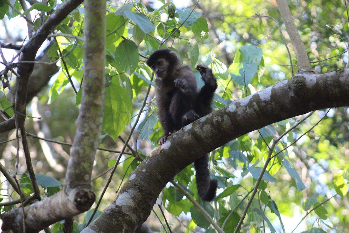 Rencontre avec des petits singes sur le chemin de la route