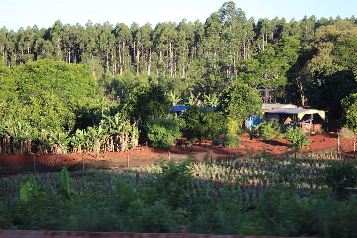 Misiones, la terre est rouge du fait de la quantité de fer dans le sol